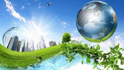 Zielona energia - uprawa wierzby energetycznej