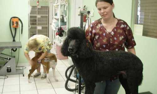 Groomer, czyli psi fryzjer