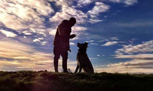 Pies posłuszny i w dobrej formie - ośrodek szkolenia psów