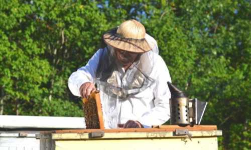 Zakładamy pasiekę – ile kosztuje sprzęt pszczelarski i akcesoria