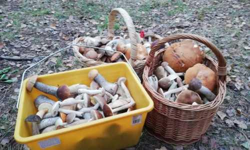 Sprzedaż grzybów - czy to dobry pomysł na biznes