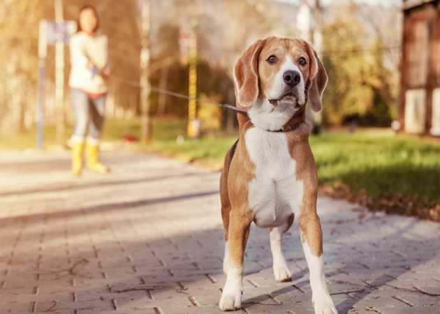 Wyprowadzanie psów - czy to dobry pomysł na biznes