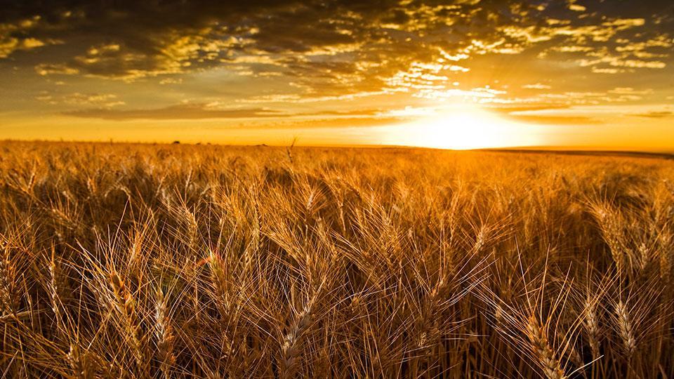 Franczyza w agrobiznesie