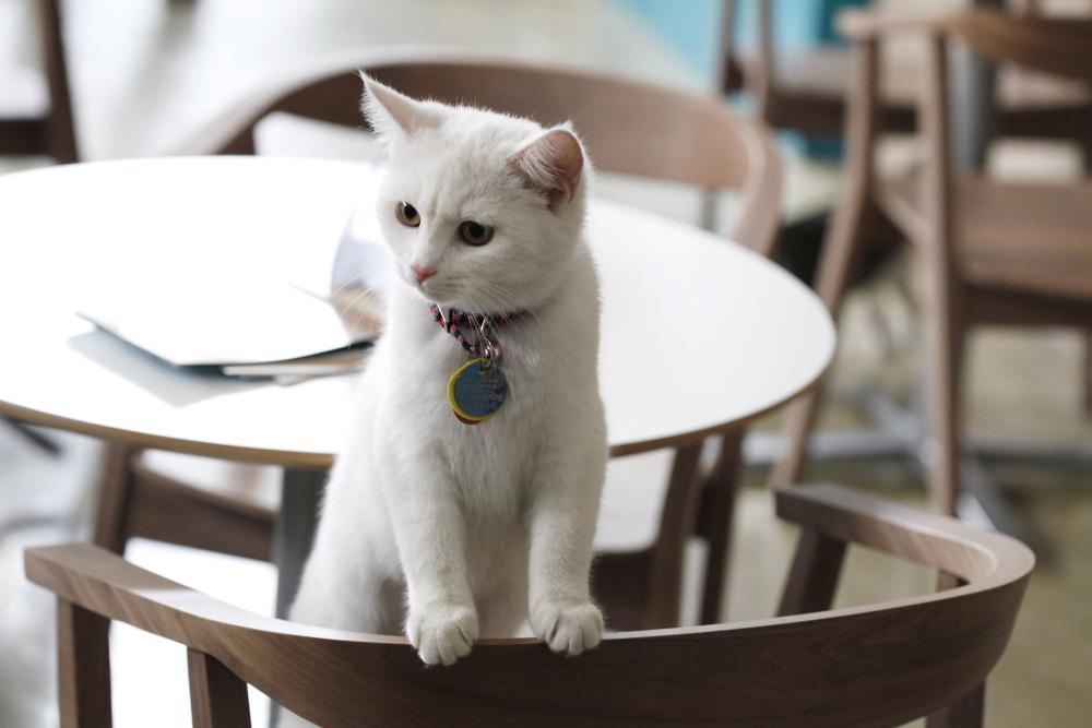 Filiżanka kawy w towarzystwie uroczych futrzaków - np. CAT CAFE